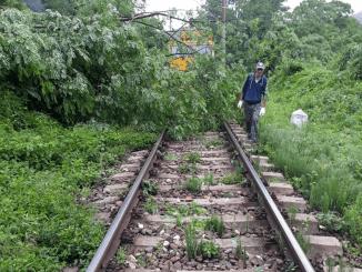 arborii căzuți pe calea ferată