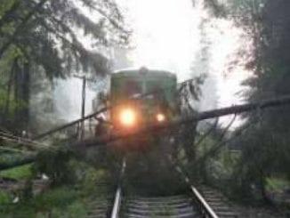 probleme pe calea ferată copac căzut pe calea ferată
