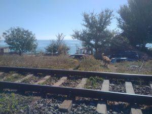 reparații pe linia ferată Constanța-Mangalia